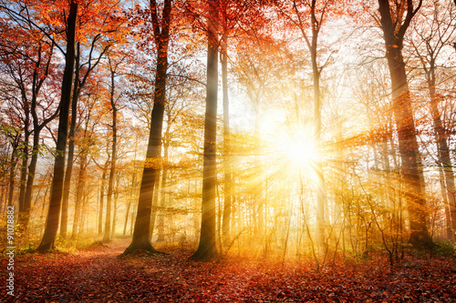 Photo  Beautiful autumn sunlight in a forest