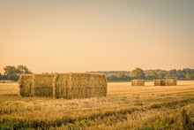 Harvested Straw Bales On A Cou...