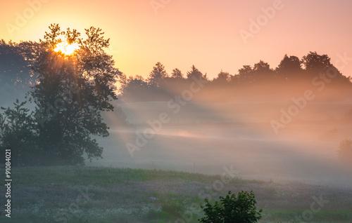 Fototapeta łąka laka-we-mgle
