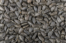 Backround From Roasted Sunflower Seeds