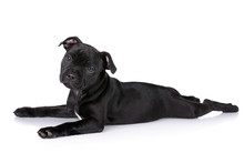 Funny Black Puppy On A White Background
