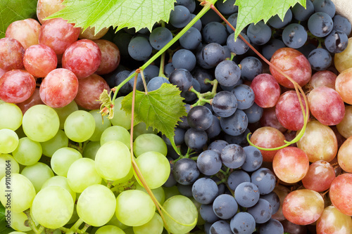 Fotografiet  Bunch of colorful grapes