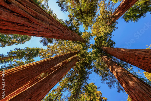 Fotografía  Giant tree closeup in Sequoia National Park
