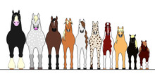 Various Horses Lining Up In Height Order