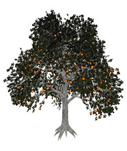 Asian Or Japanese Persimmon Tree - 3D Render