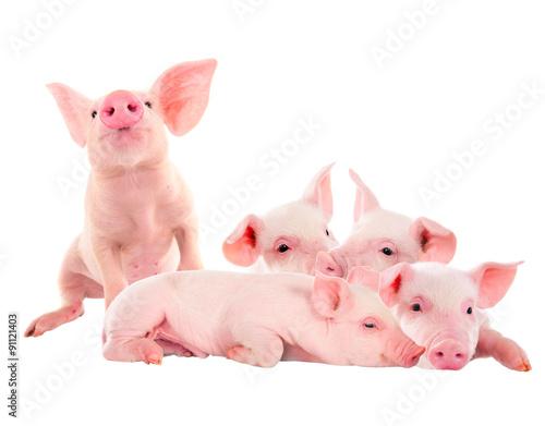 Pile of fun, pink pigs Fototapeta