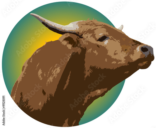 Fotografie, Obraz  An Illustration of a short horned bull with a white background