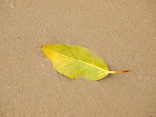 Green Leaf Drop On Sand Beach