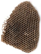 Empty Wasp Hive