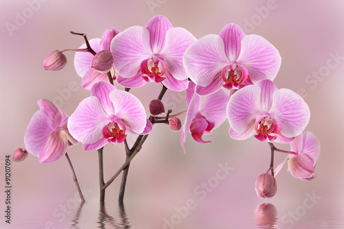 Fototapety, obrazy: Pink orchids flowers