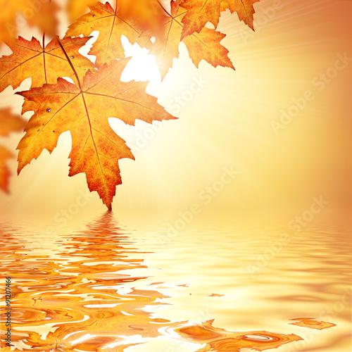 Fotografie, Obraz  Orange fall leaves border background