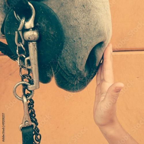 Mano acariciando caballo