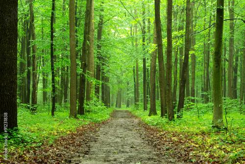 Spoed Foto op Canvas Weg in bos forest