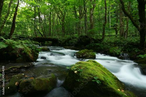Fototapety, obrazy: 奥入瀬渓流