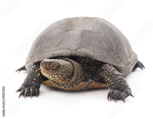 Foto op Aluminium Schildpad Large turtle.