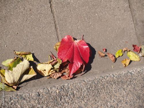 Fotografie, Obraz  Herbstgasse