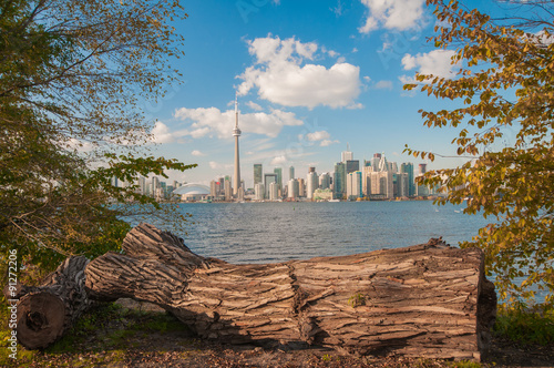 Stampe  Toronto skyline with seasonal autumn trees