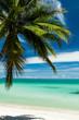 Single coconut palm on a white sand beac