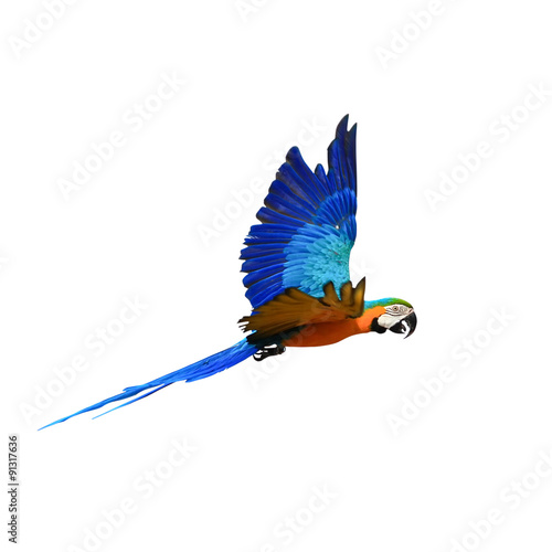 Photo sur Toile Perroquets Macaw Parrot isolated on white background with clipping path