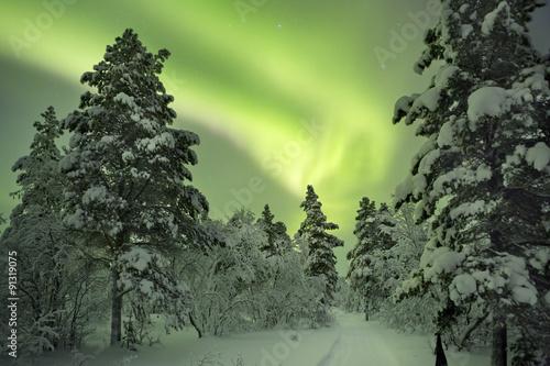 Aurora borealis over a path in winter landscape, Finnish Lapland - 91319075