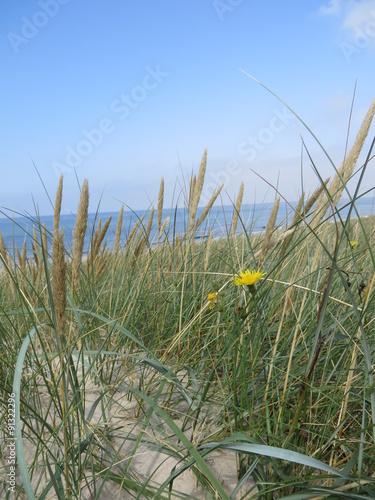 Keuken foto achterwand Noordzee Blick aufs Meer