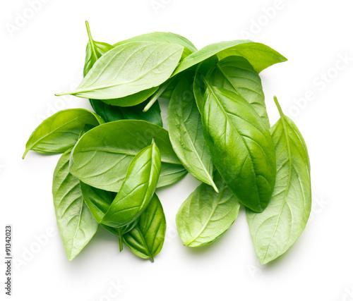 Photo basil leaves