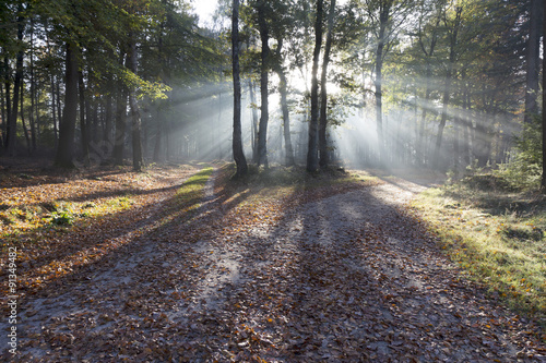 Photo Stands Nature Herfst in Nederland.