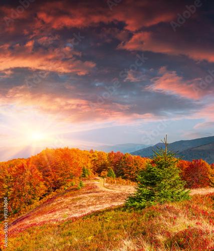 Foto op Plexiglas Crimson Dramatic autumn sunset in the Carpathian mountains.