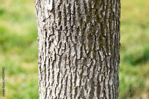 Fotografie, Obraz  trunk of a tree in a park on the nature