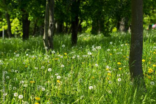Fototapeta summer park obraz na płótnie