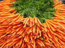 Huge Pile Of Fresh Orange Carr...