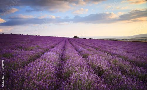 Wall Murals Cappuccino Lavender field