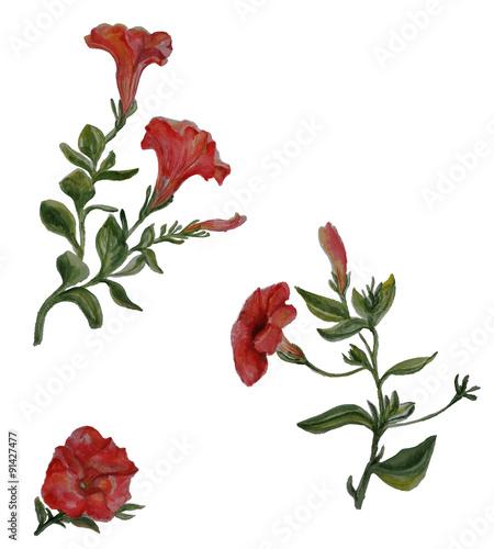 Watercolor Petunia Flowers Set Isolated Botany Illustrations On White Background Single Flower