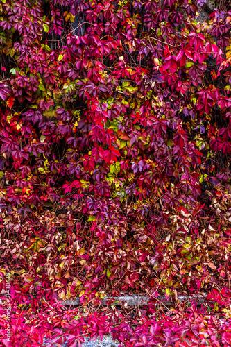 Autumn wild grape on floor and wall