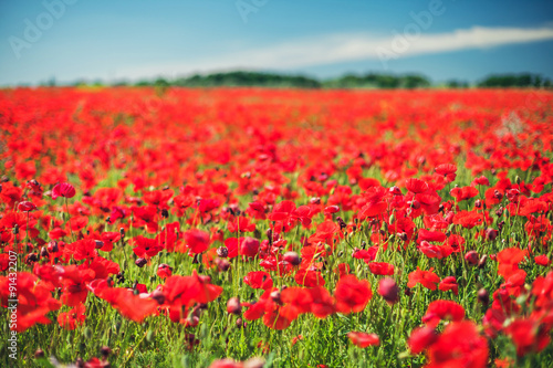 Fototapeta Poppies obraz na płótnie