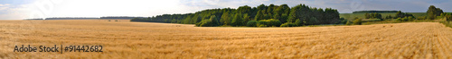 Deurstickers Platteland wheat field panorama