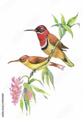 watercolor-wild-exotic-birds-on-flowers