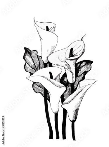 Photo  Calla lilly floral, black and white illustration background