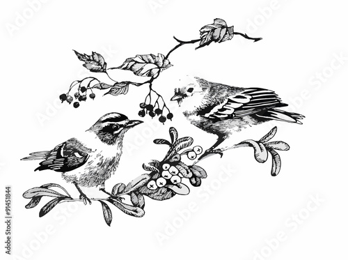 black-and-white-watercolor-illustration-of-bird-on-twig