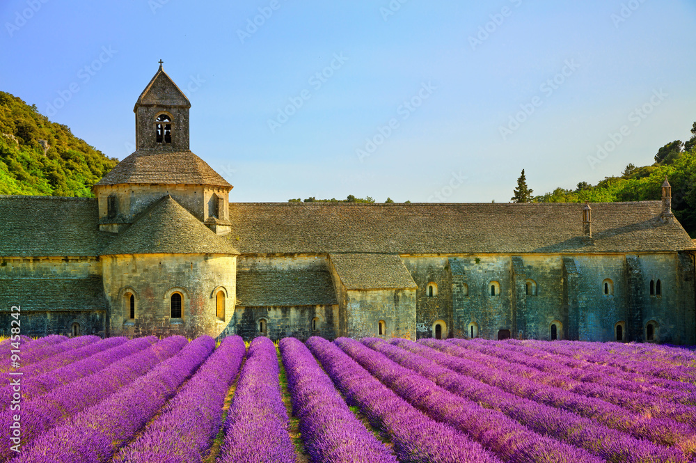 Fototapeta Abbey of Senanque blooming lavender flowers on sunset. Gordes, L