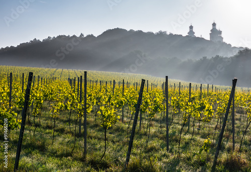Fototapeta Vineyard on the Silver Mountain near Krakow, Poland with the camaldolese monastery towers in the background obraz