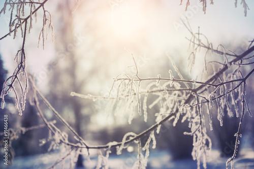 szron-na-drzewach-w-zimowym-lesie