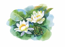 Watercolor White Water-lilly F...