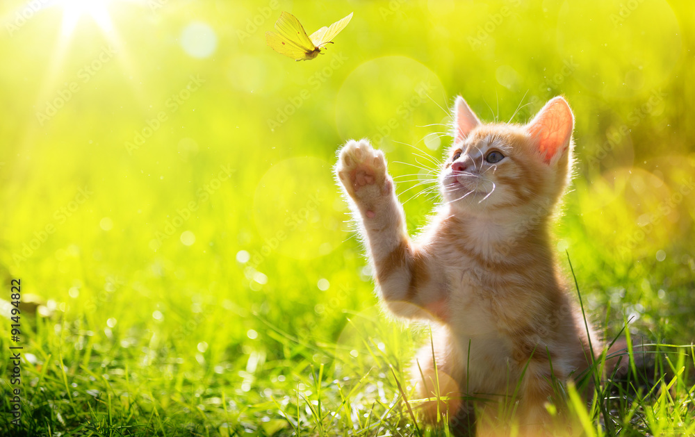 Fototapety, obrazy: art Young cat / kitten hunting a ladybug with Back Lit