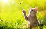 art Młody kot / kotek polujący na biedronkę z podświetleniem Back Lit