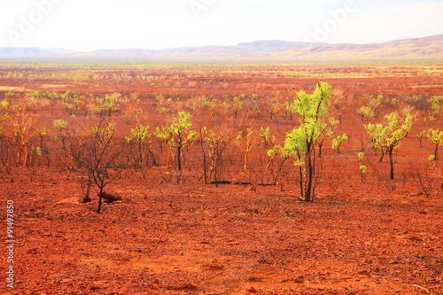Foto op Canvas Baksteen Landscape after a bushfire in Australia