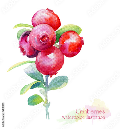 Fotografia  Watercolor illustration of cranberry.