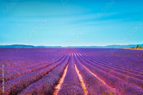 Fotobehang Lavendel Lavender flowers blooming field and clear sky. Valensole, Proven