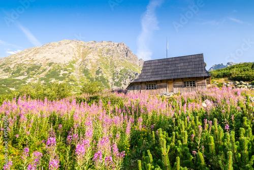 Drewniana chata na ukwieconej łące w Tatrach
