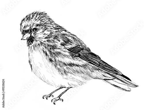 μεγάλο μαύρο πουλί εκτυπώσεις εφηβική ηλικία με σφιχτό pussys